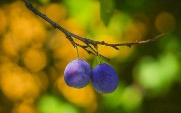 ветка, фрукты, размытость, плоды, сливы, боке