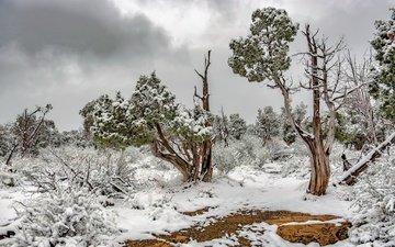 небо, деревья, снег, растения, зима, национальный парк, можжевельник, mesa verde