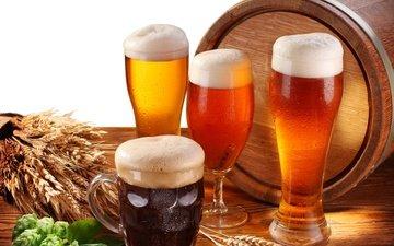 стол, бокал, колосья, кружка, белый фон, стаканы, пиво, пена, бочка, хмель