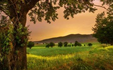 трава, деревья, холмы, закат, пейзаж, поле