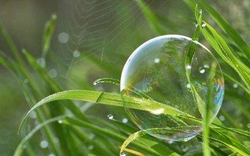 трава, природа, макро, капли, паутина, боке, мыльный пузырь