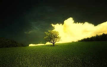 grass, clouds, nature, tree, horizon, shadows