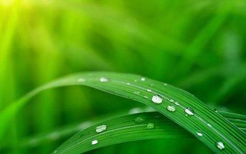 трава, природа, роса, капли, размытость