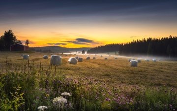the sky, trees, morning, fog, field, horizon, hay, summer, wildflowers