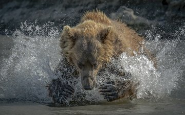 face, water, paws, bear, squirt