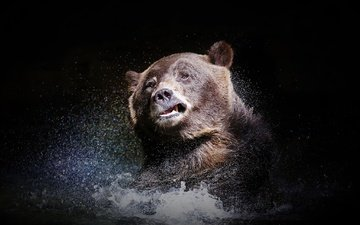 face, water, look, bear, squirt, black background