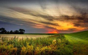 the sky, nature, sunset, field, summer, netherlands, holland, grevelingen