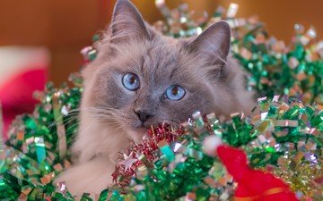 new year, cat, tinsel
