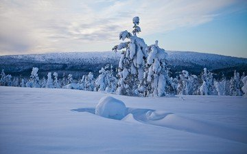 nature, forest, winter, lapland