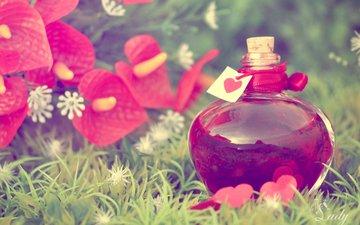 напиток, бутылочка, флакон, эликсир, любовное зелье