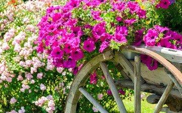 flowers, garden, cart