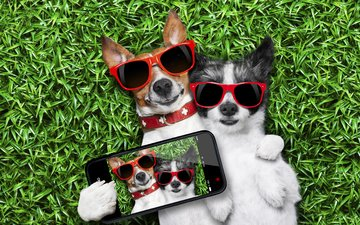grass, glasses, humor, phone, photo, dogs, selfie
