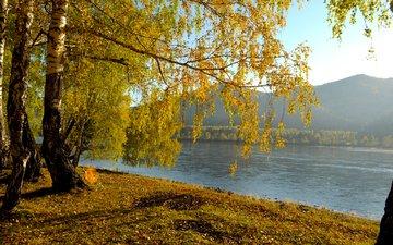река, природа, пейзаж, березы, осень