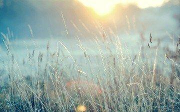 трава, зима, макро, иней