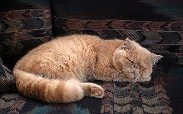 кот, мордочка, усы, кошка, сон, коврик, персидский
