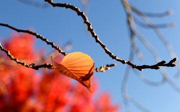 небо, листья, макро, ветки, осень, размытость, quang vu