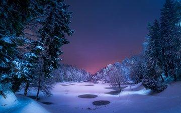 ночь, деревья, снег, природа, лес, зима