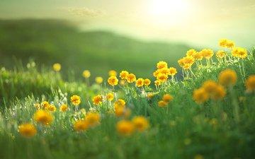flowers, hills, nature, landscape, field, summer