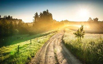 дорога, холмы, природа, пейзаж, утро, туман, рассвет, лето