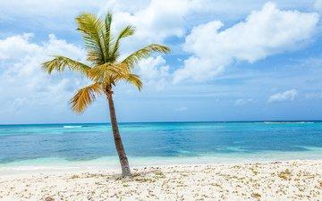 небо, облака, пейзаж, море, песок, пляж, пальма