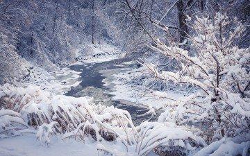 деревья, река, снег, природа, лес, зима, пейзаж