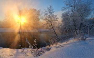 the sun, snow, nature, forest, winter, morning, zhmak evgeniy