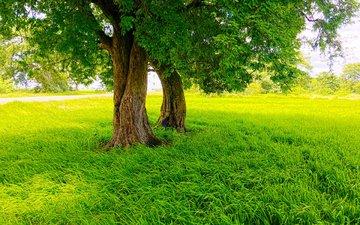 трава, деревья, природа, парк, лето, газон
