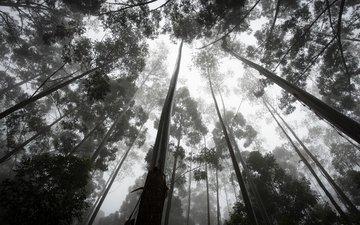 деревья, природа, лес