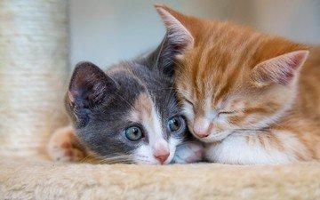 кот, мордочка, усы, кошка, взгляд, котята