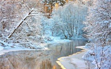 деревья, река, снег, природа, лес, зима, ветки