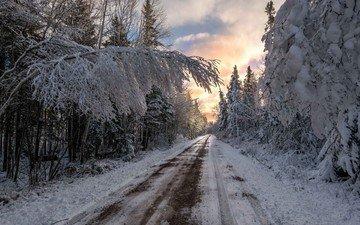 дорога, облака, деревья, снег, природа, лес, зима, ветки