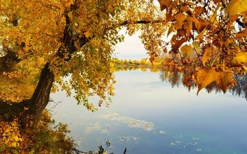 river, nature, tree, leaves, landscape, branches, autumn