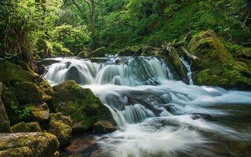 деревья, река, природа, камни, лес, водопад, мох