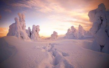 снег, природа, лес, зима, следы