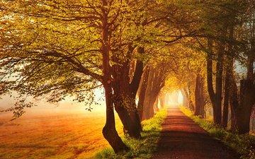 деревья, природа, утро, поле, рассвет, аллея