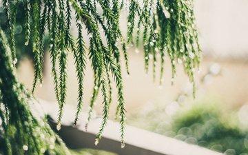 макро, капли, блики, растение