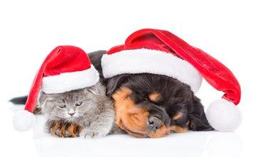новый год, котенок, собака, щенок, мордочки, колпаки