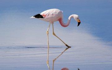 flamingo, bird, beak, feathers, mirek petricek