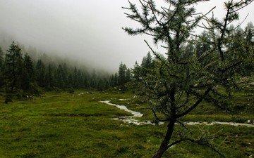 деревья, река, природа, дерево, лес, пейзаж, туман, гора