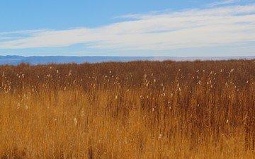 небо, трава, облака, природа, растения, пейзаж, утро, поле, горизонт, луг, холм, саванна, рыжих