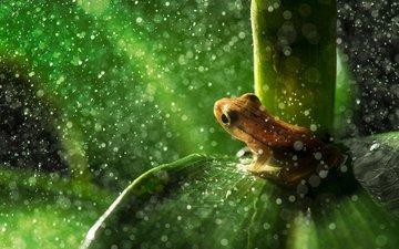 листья, лягушка, дождь, растение