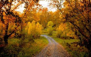 деревья, природа, лес, пейзаж, осень, тропинка