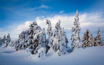 небо, облака, деревья, снег, природа, лес, зима