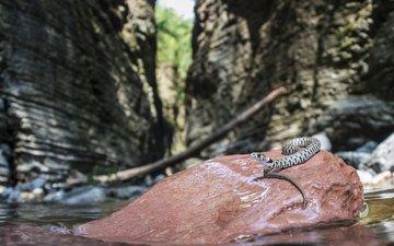природа, размытость, камень, змея, рептилия, пресмыкающиеся, davide lopresti