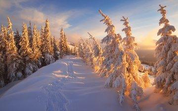 горы, природа, лес, зима, карпаты