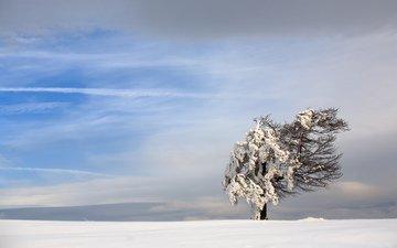 небо, снег, природа, дерево, зима, пейзаж, ветер