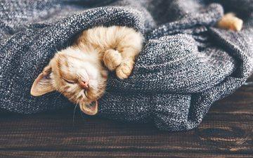 кот, мордочка, усы, кошка, сон, котенок, рыжий