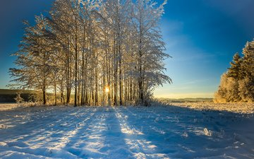 the sky, trees, snow, nature, forest, winter, morning