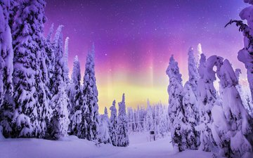 природа, лес, зима, пейзаж, северное сияние, steve rosset