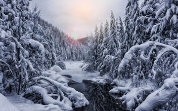 river, nature, forest, winter, treatment, sandra mcmartin